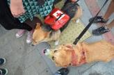 San Diego Comic Con 2013 Zombie Walk Dogs