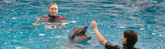 Dolphin Tale 2 2014 Movies