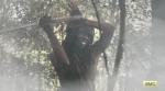 The Walking Dead Season 5 Part 2 Michonne Danai Gurira 2