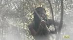 The Walking Dead Season 5 Part 2 Michonne Danai Gurira 3