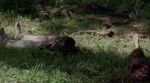 The Walking Dead Season 5 Part 2 Trailer Screenshot 18