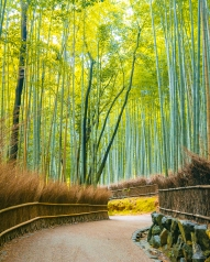 Japan Kyoto Bamboo Forest